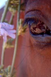 kawaayos-eye